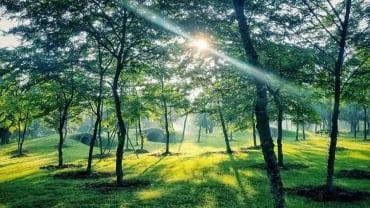 Công viên Hồ Thiên Nga - Ecopark